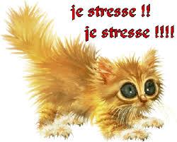 stress-belgique